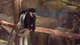a long haired monkey in the zoo