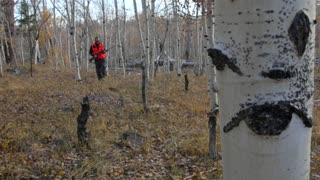 A male hunting with his rifle in the aspen trees