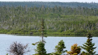 A moose in the distance walking in lake