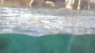 a polar bear swimming at the zoo