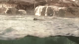 a polar bear swimming in slow motion