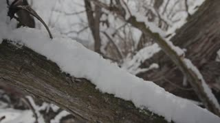 a snowy tree limb jib shot