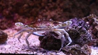 a toddler looking at crab at the aquarium