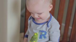 a toddler playing with his pet parakeet