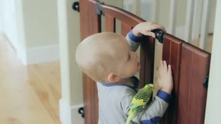 a toddler with a bird in his home