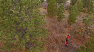 Aerial ascending shot of a family walking through the woods hunting
