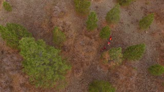 Aerial dolly shot of a family walking through the woods hunting