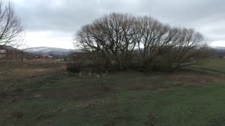 Aerial shot of deer under a tree in field