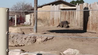 african rhinos at the zoo