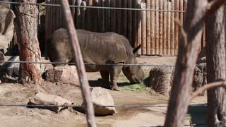 an african rhino at the zoo