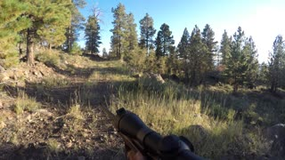 An elk hunter holds rifle and walks through forrest