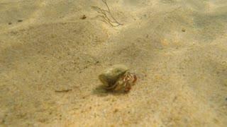 An underwater shot of an ocean sand crab walking in sand on beach