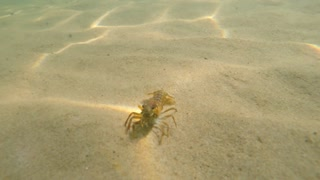 An underwater shot of lobster with missing claws