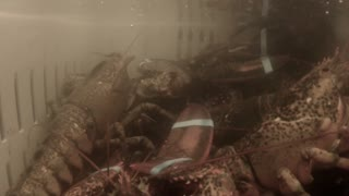 an underwater shot of lobsters on a fishing boat