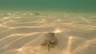 An underwater shot of ocean crab on the sea floor bottom