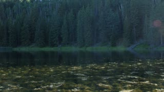 Beautiful mountain lake with tons of flies and bugs and moss