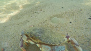 Beautiful sea crab walking along an ocean sandy floor