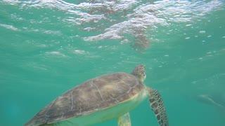 Beautiful sea turtle diving underwater in ocean