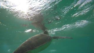 Beautiful sea turtle swimming underwater in ocean