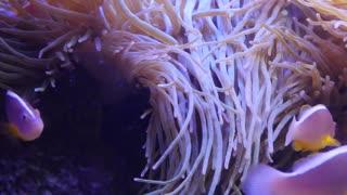 Beautiful tropical fish swimming in the ocean reef