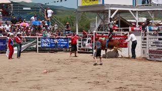boy calf riding in childrens rodeo