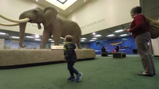 Boy looking at elephant in life science museum