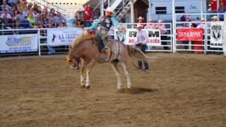 Bucking Saddle Bronc at Rodeo