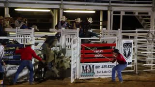 Bull riding at the rodeo