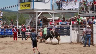 calf riding at childrens rodeo