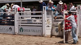 calf riding in childrens rodeo