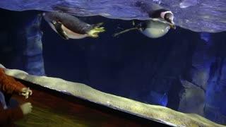 children looking at penguins in the large aquarium