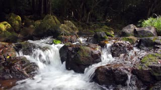 Clear Jungle Stream with Mossy Rocks