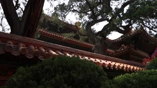 cool roofs in the forbidden city in beijing china