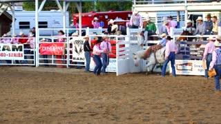 Cowboy falls off Bareback Ride at Rodeo