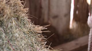 Cowboy places a rifle against barn wall