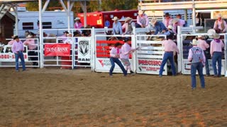 Cowboy Rides Saddle Back at Rodeo