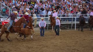 Cowboy Struggles with Steer at Rodeo