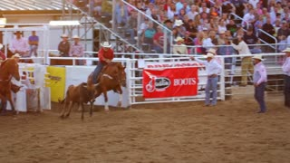 Cowboy Wrestles Steer at Rodeo