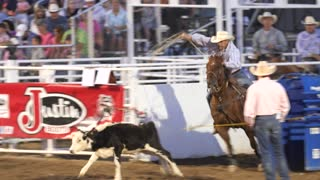 Editorial a calf roper cowboy in a PRCA Oakley rodeo