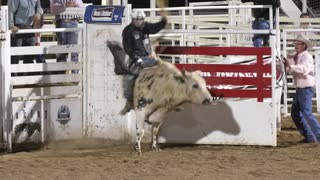Editorial a cowboy rides giant bull at a PRCA rodeo