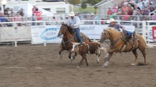 Editorial cowboy steer wrestling in PRCA rodeo event