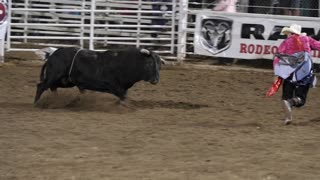 Editorial rodeo clown teases giant bull at a PRCA rodeo