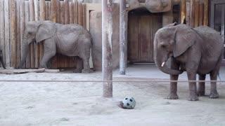 Elephants at the zoo