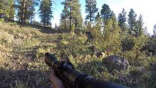 Elk hunter holds rifle and walks through forrest