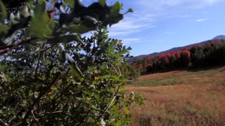 Fall in the mountains dolly shot