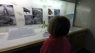 Families looking at insects in the Bean life science museum