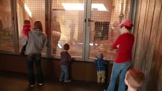 Families watching a polar bear at zoo