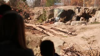 families watching grizzly bear at zoo