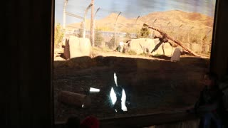 Families watching polar bear at zoo