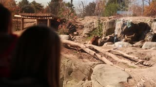 families watching the grizzly bear at the zoo